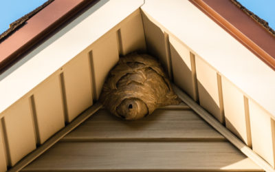 Signs That Pests Are Damaging Your Roof